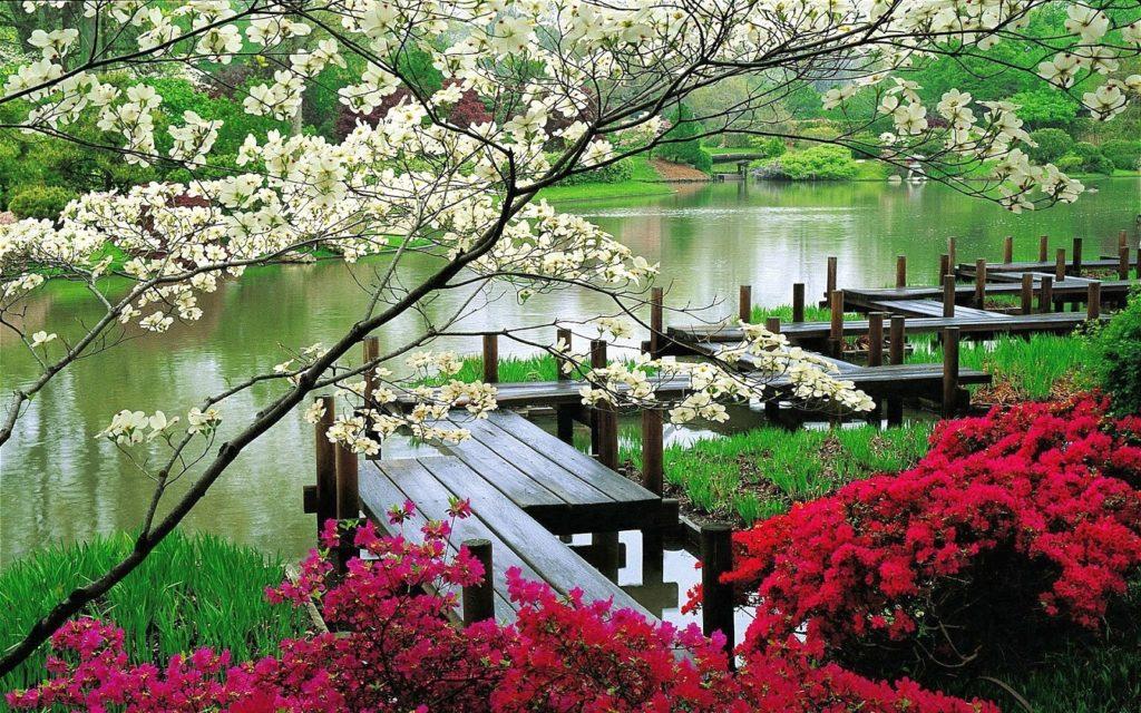naturaleza de japon