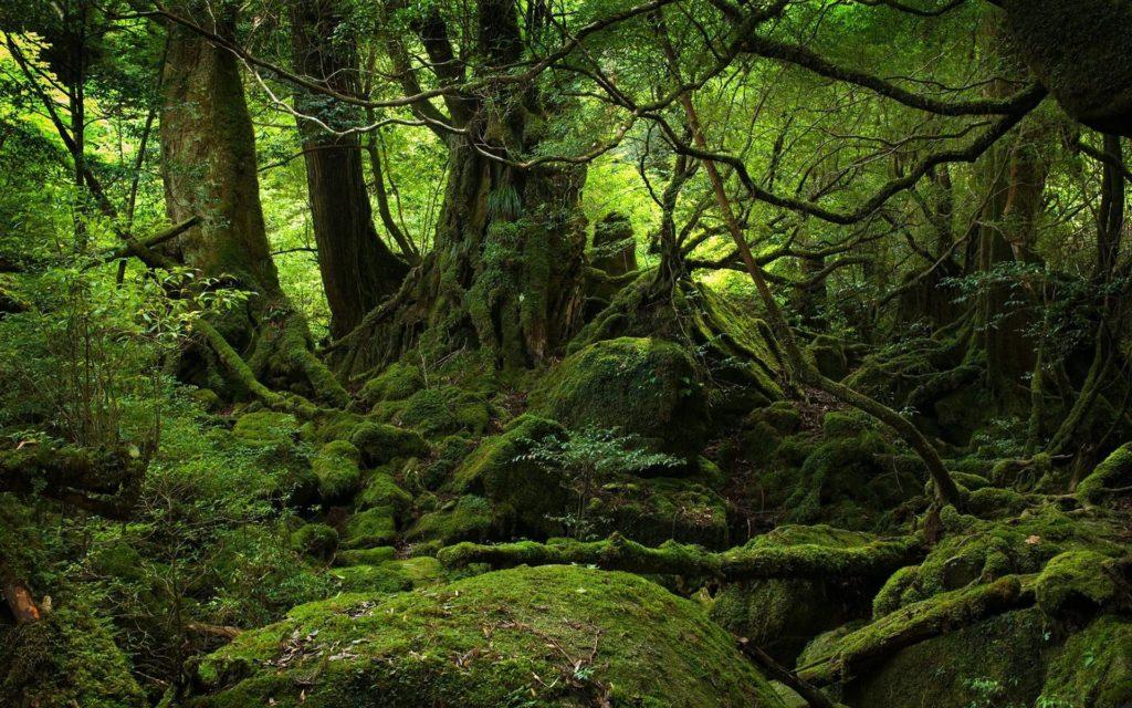 bosques de japon