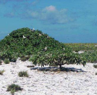 Isla Howland: lo que no sabes sobre esta hermosa isla del Océano Pacífico