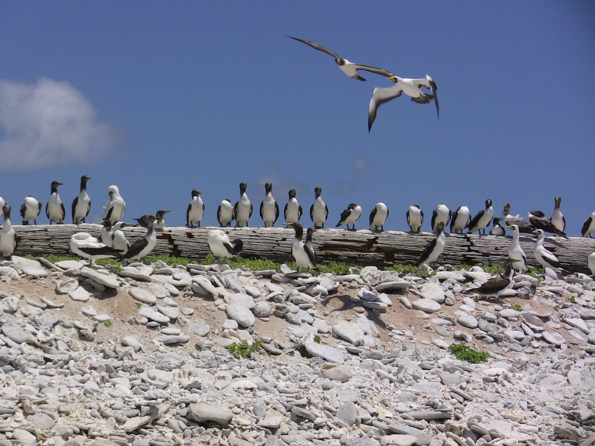 islas howland 8