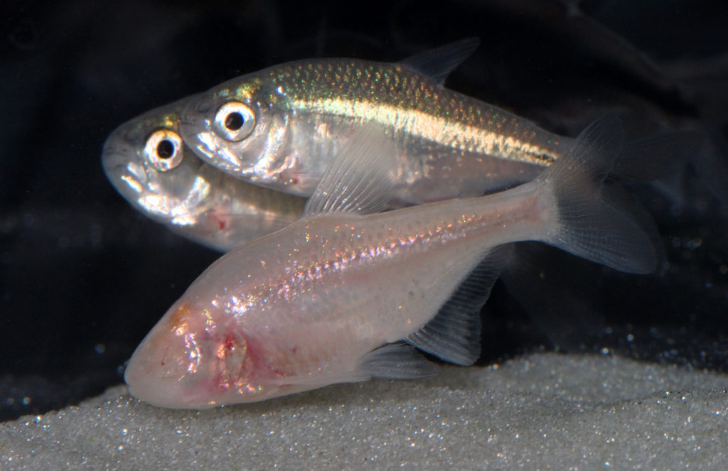 variedad de especies acuaticas