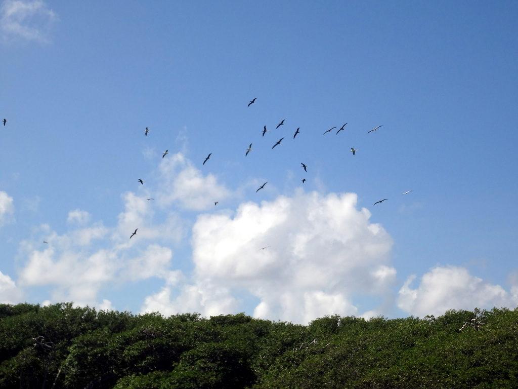 Archipielago-Las-Aves-6