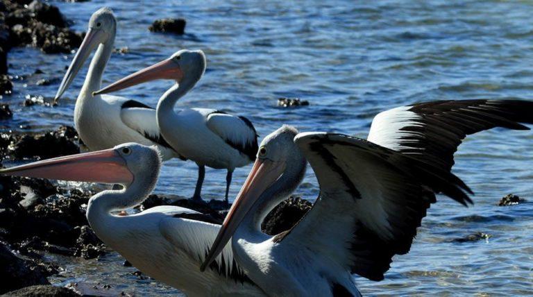 fauna de la isla gorgona