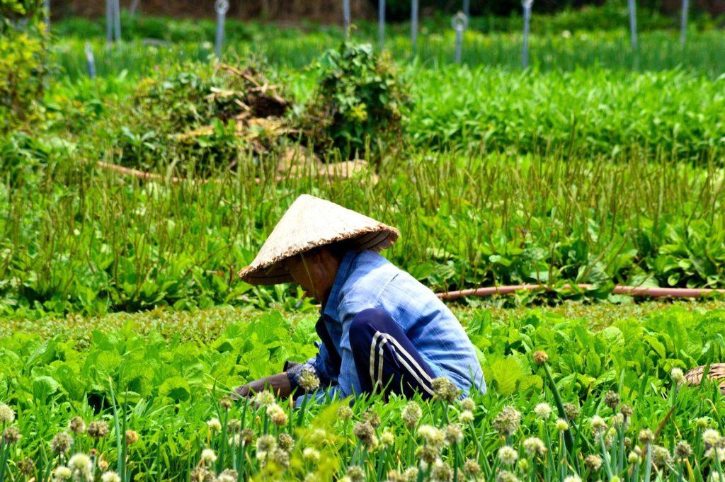 agricultura de la isla de santorini