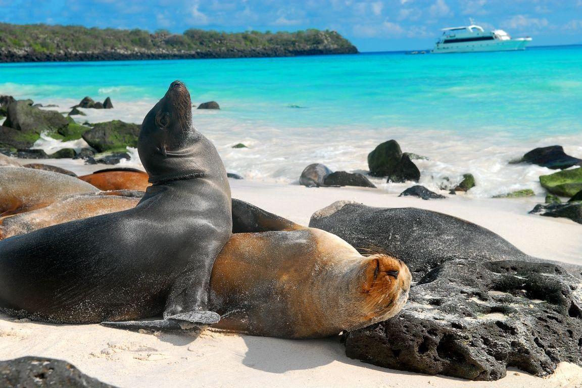 Islas Galápagos: historia, origen, ubicación, turismo, playas y más