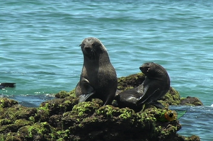archipielago juan fernandez 14