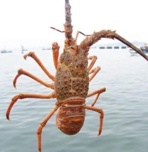 archipielago juan fernandez 15