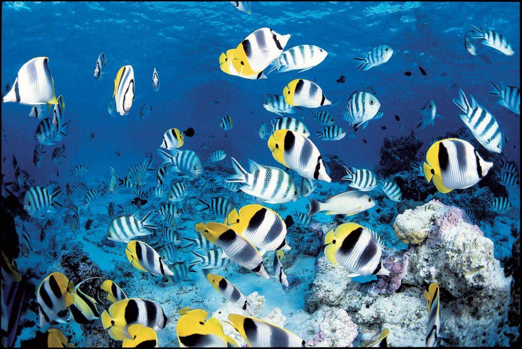 variedad de peces en la isla bora bora