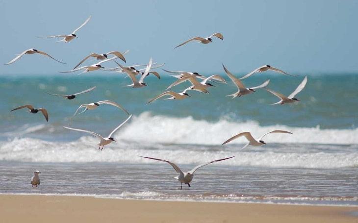 aves marinas en bora bora