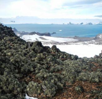 Isla Rey Jorge: lo que aun no sabes sobre esta isla de la Antártida