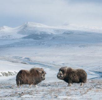 Isla de Wrangel: lo que aun no sabes sobre esta isla del ártico