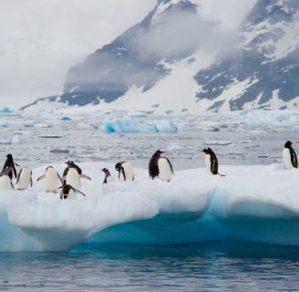 Descubra cuales son las principales Islas de la Antártida y todo sobre ellas