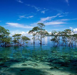 Islas Andamán: Cómo llegar, mapa, lugares turísticos, aborígenes y más
